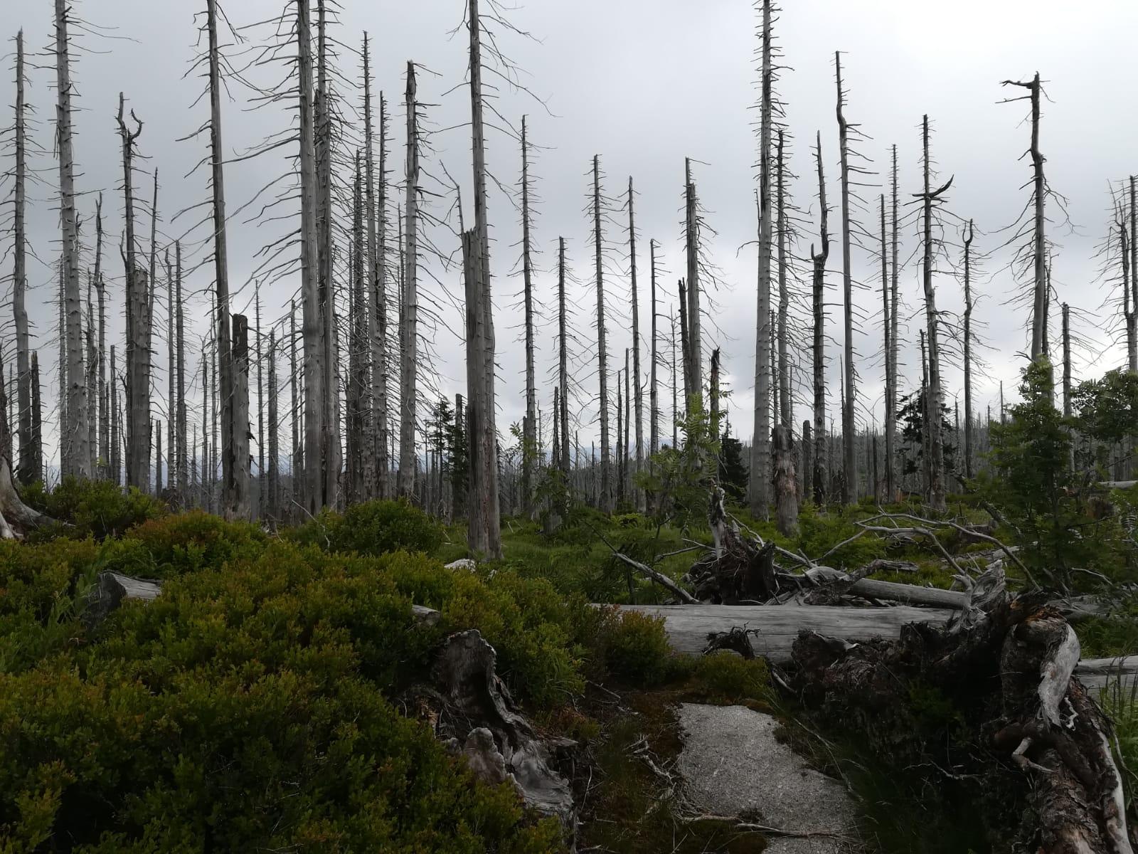 Wanderung – Tote Bäume