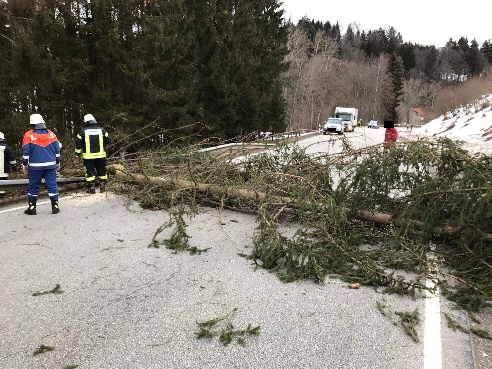 Baum über Straße – 04.03.2019