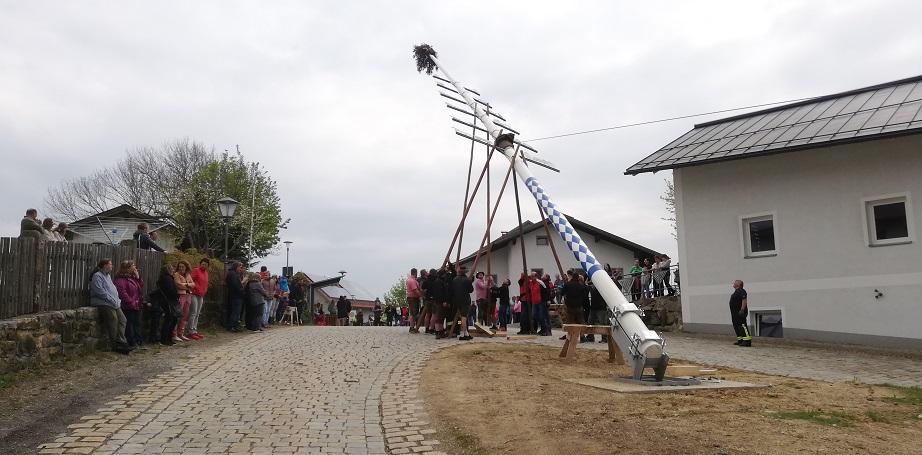 Maibaum 2019 - Immer dabei: Viele Zuschauer!