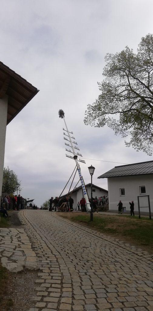Maibaum 2019 - Fast geschafft!