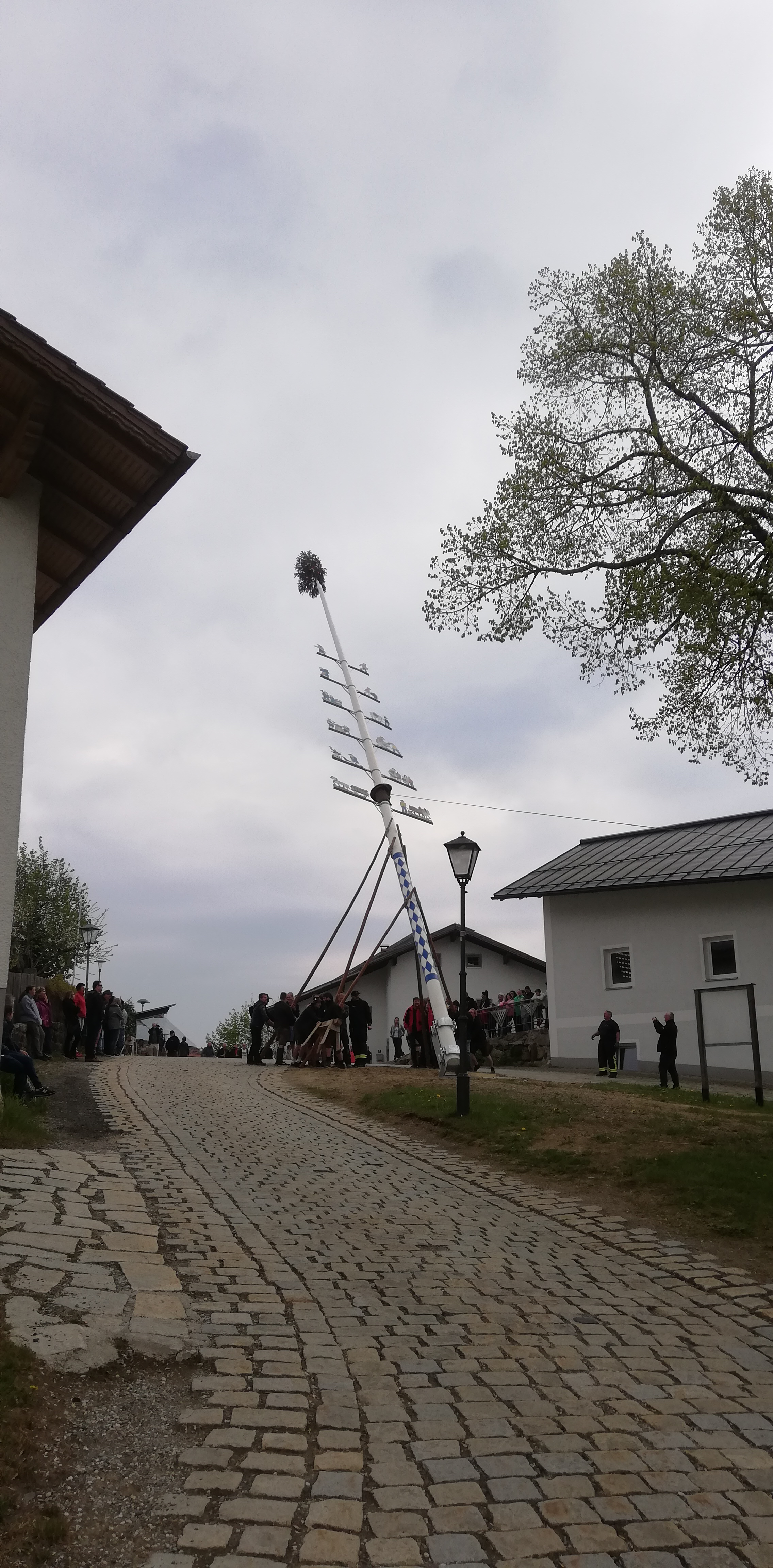 Maibaum 2019 – Fast geschafft!