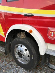 Feuerwehr Katze